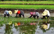 رفع تنش آبی در مزارع شالیکاری استان گیلان